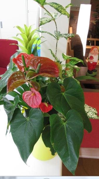 事務所カウンターのアプローチ植物です。
