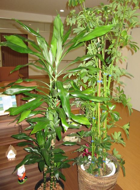 背の高い植物